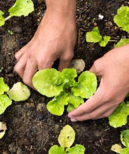 Hands planting - ChurchPlants.com